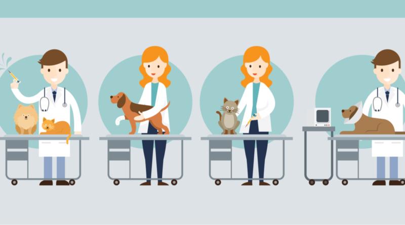 veterinary shadowing